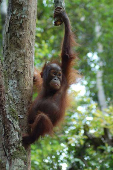 kalimantan tangkiling national park jungle, and dayak culture wild life