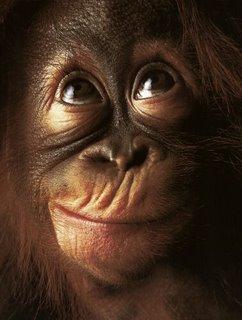 Orangutan Kalimantan Tours