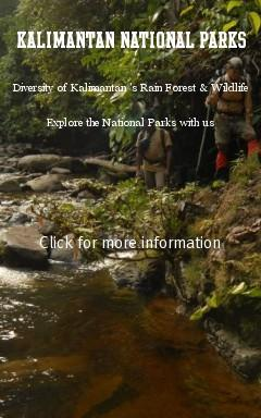 Kalimantan National Parks are various, The Adventures Jungle of Kayan Mentarang, to the soft Kersik Luway Orchid Reserve. Orangutans can be found at Tanjung Puting, Wehea, and Kutai National Park. Derawan Maritime National Park with it's Manta's and coral reef