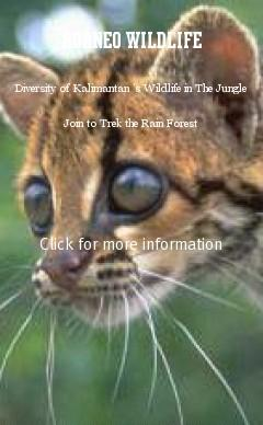 kalimantan borneo wildlife in the jungle safari tours