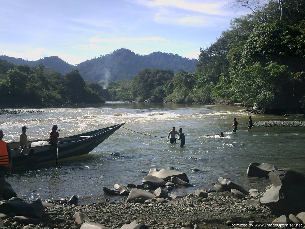 kayan mentarang national park,trekking the forest of kayan mentarang reserve, tour kayan mentarang,trips kayan mentarang,kayan river cruise,bahau river,pujungan,long ketaman, long jelet,apokayan, krayan,dayak,jungle,bird,watching,flights,reservation,hotel booking,tour,safari,rain forest,flora fauna