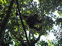 Dayak Longhouse Kalimantan Central Kalimantan Province Indonesia Borneo Island Wild Life Culture,dive, duiken, Reissen, Reizen.