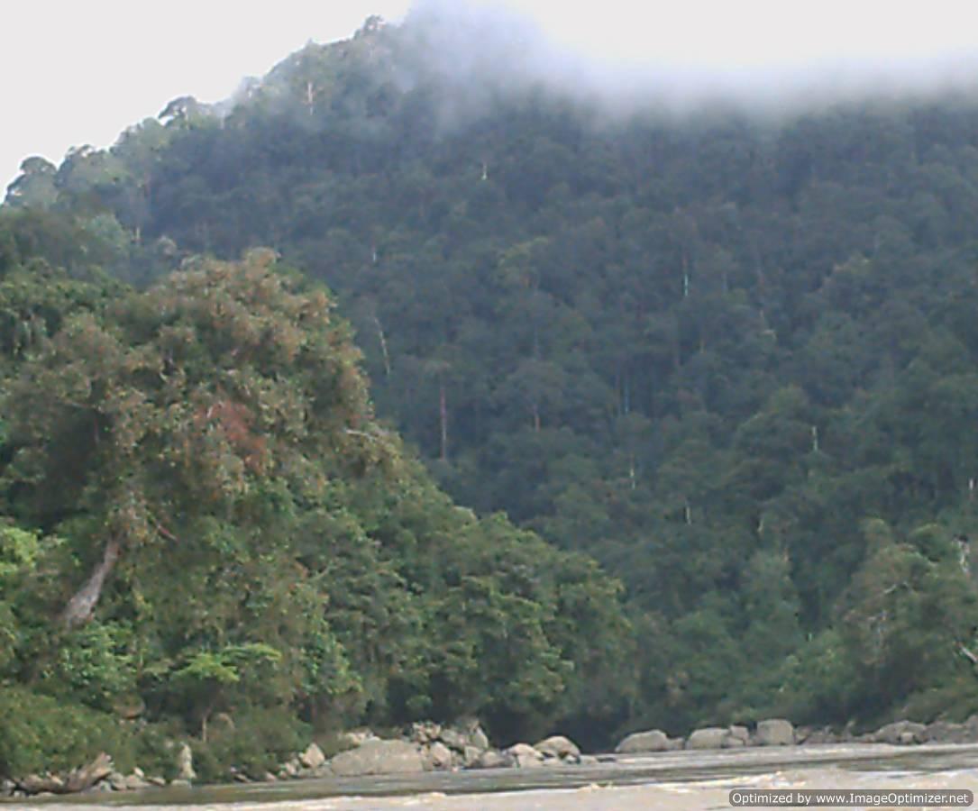 kalimantan,kayan,river,mentarang,trip,tour,trek,reservation,guide,jungle, wildlife,rain,forest,dayak,punan,border,indonesia,borneo