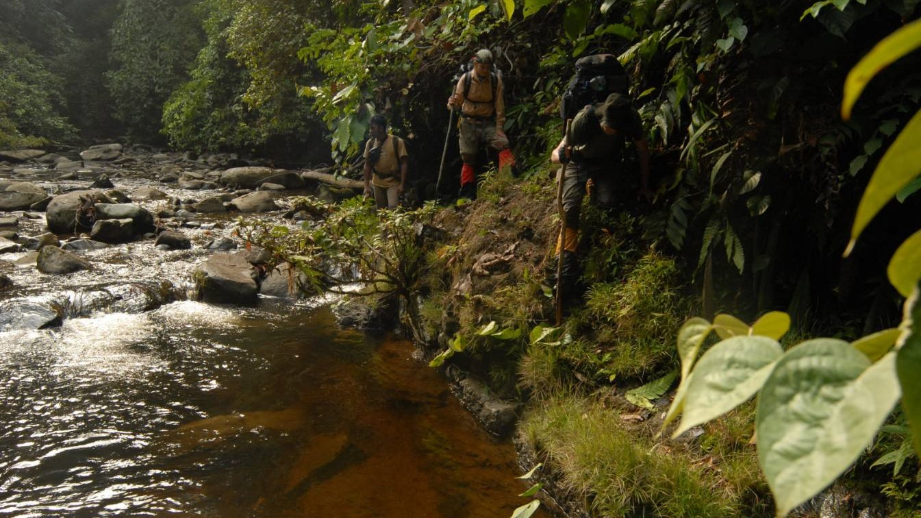 kalimantan, borneo, indonesia, trek, tour, jungle, rain forest, forest, dayak, culture, trip, hike, guide, flora, fauna, river