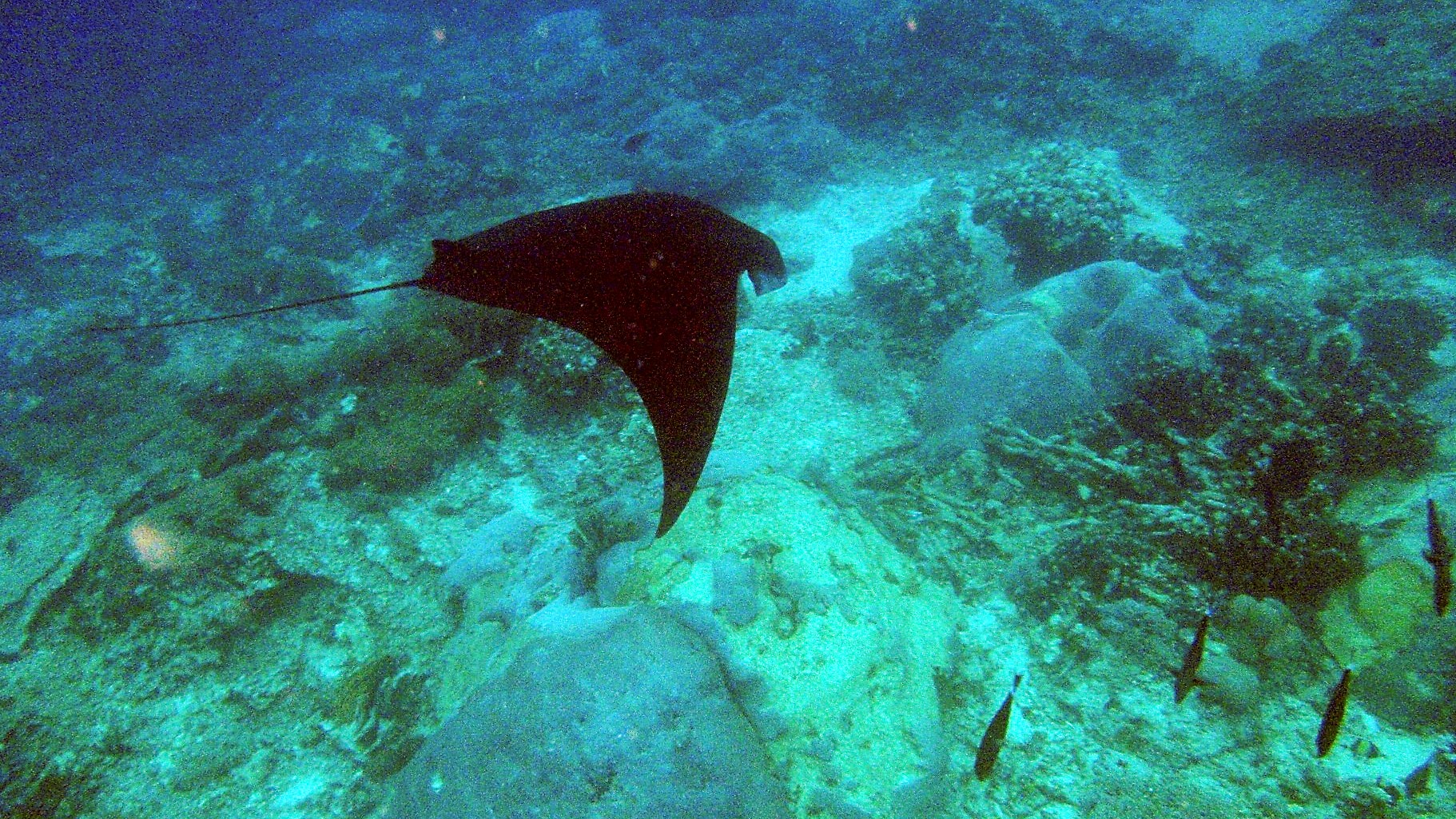derawan, maratua, sangalaki, kakaban, island,s yelly fish lake, manta, dive, diving, kalimantan, borneo, indonesia, resort, trip, tours, coral reef, jungle, wildlife forest, oragutan