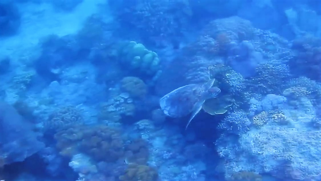 turtle, teluk sumbang, berau, kaniungan,dayak, jungle, dive, snorkel, eggs, laying, rain forest, borneo, kalimantan, indonesia, expedition, tour, trek, trip, safari, wildlife