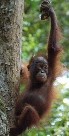 kalimantan tours, wildlife, tour, tours, borneo, jungle, hike, trail, forest, dayak, trip, safari, longhouse