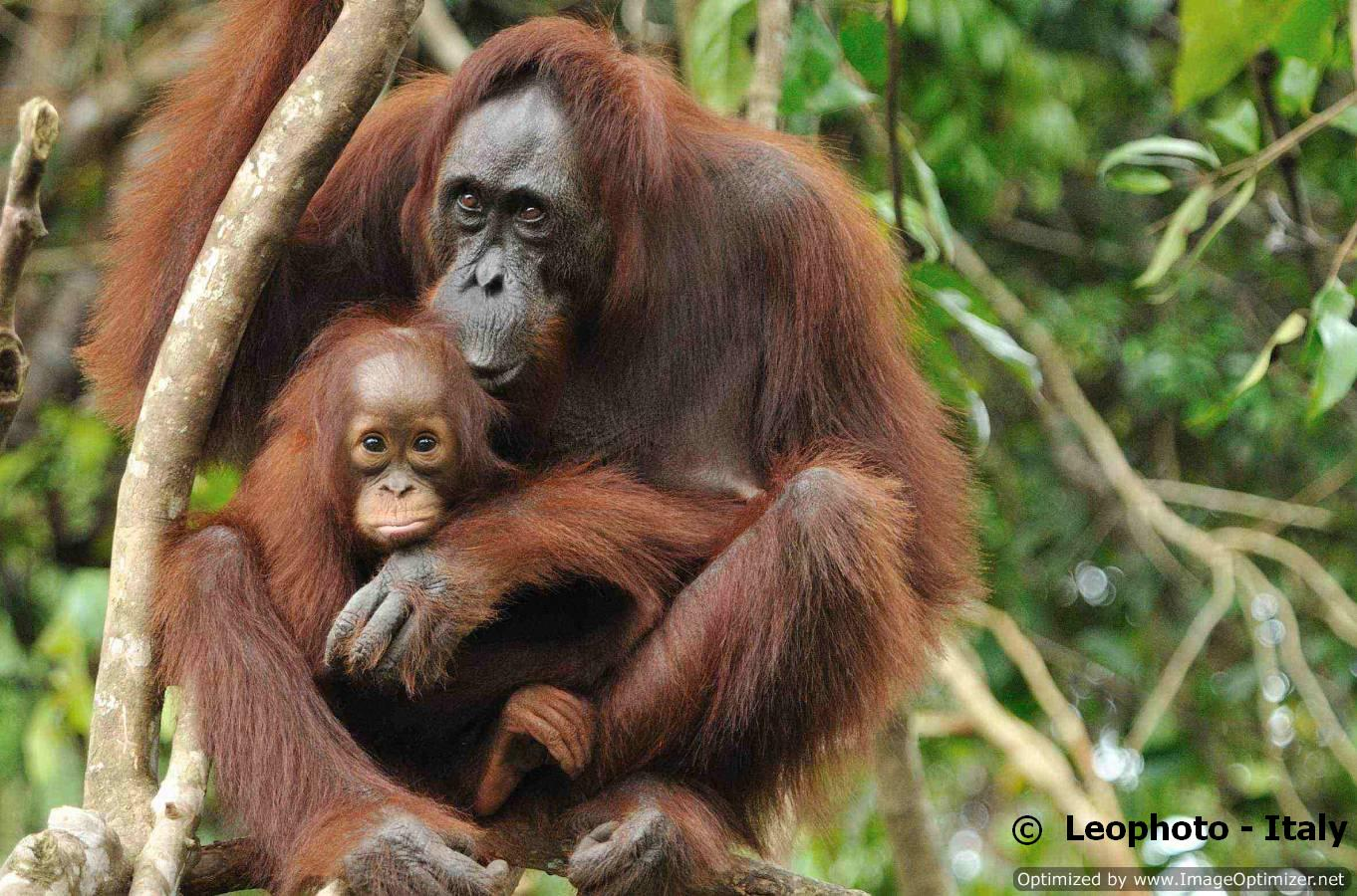 borneo, kalimantan, tours, tour, tangkiling mountain, pulau kaja, orangutan, wildlife, safari